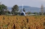 Plane on crops field