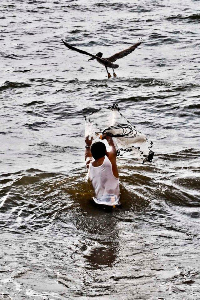 pelican net and fisherman