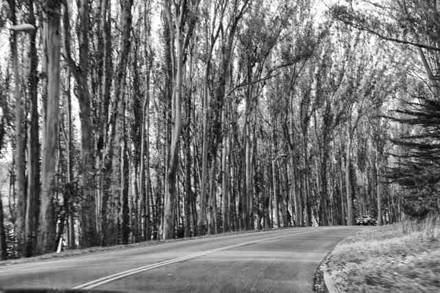 Presidio Road